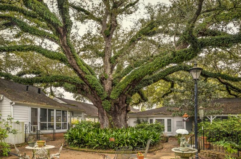 Gaubert Oak #1