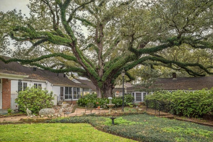Gaubert Oak #3