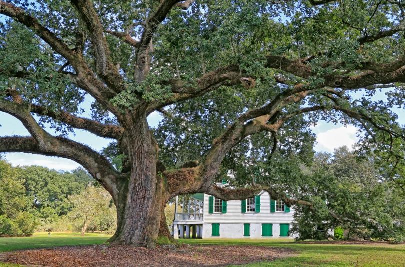 e d white historic site oaks the bayou lafourche historic live