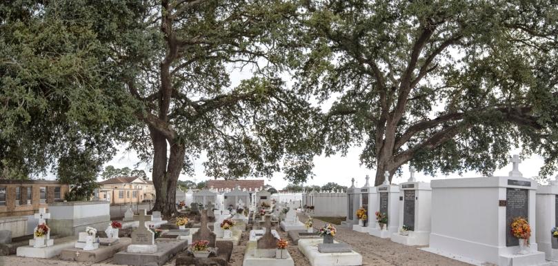 st-j_cemetery-oaks_1