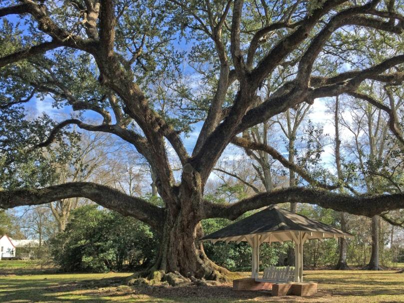 grace-frost-oak