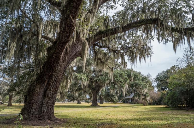 leighton-plantation-oaks-4