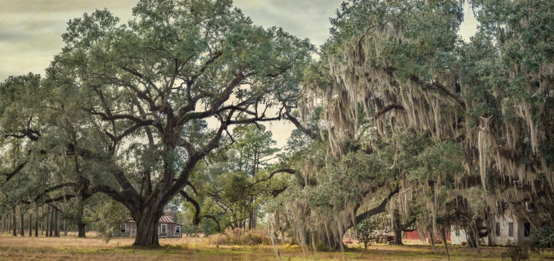 wavery-oaks-pano-study-2