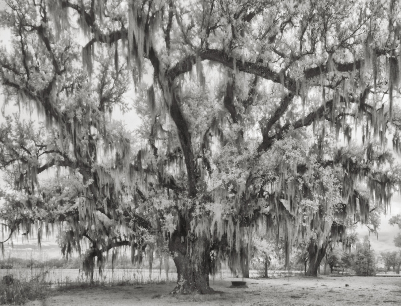 webre-oaks-10