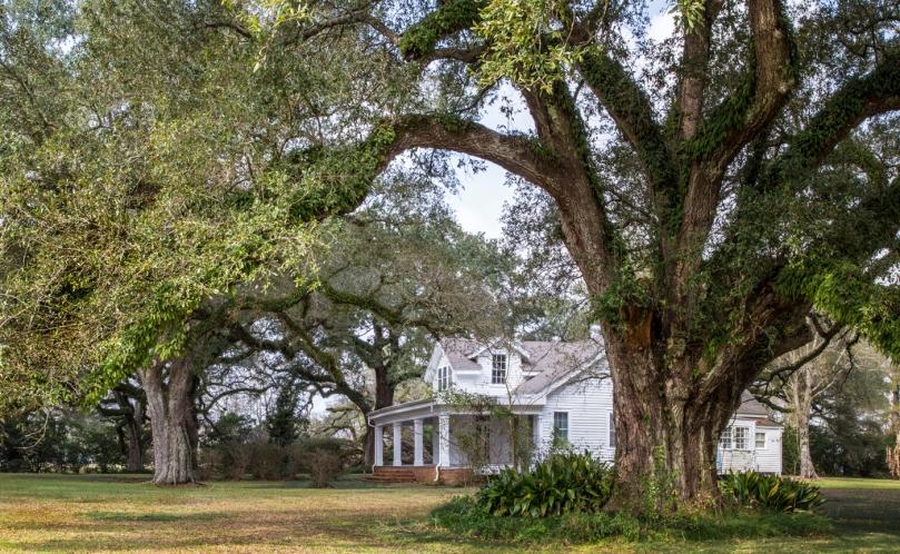 Blouin Plantation #1